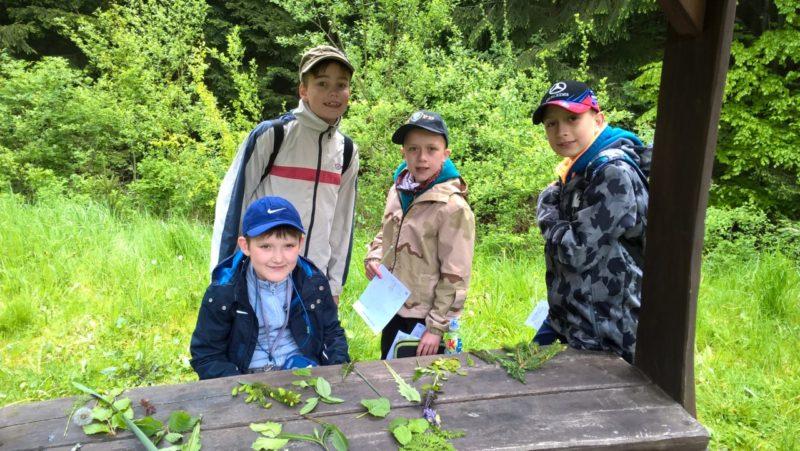 Projekt 4. třídy - Návštěva v lese, výstava jehlic a lupenů