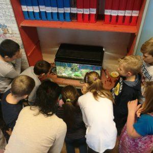 Děti pozorují rybičky v akváriu