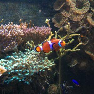 Rybička v akváriu