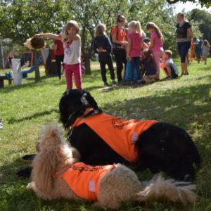 Psi ze spolku Pomáháme psím srdcem