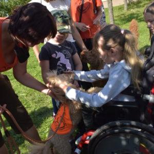 Holčička na vozíčku se mazlí se psy