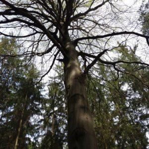 krása našich stromů
