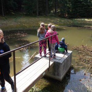 pozorování života v rybníčku